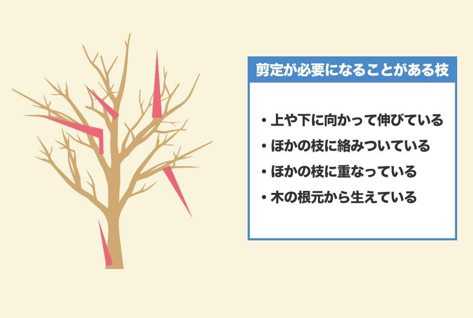どの枝を剪定すればいい?手入れが必要な基準を紹介